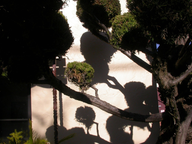 dr. suess trees, tree shadows, day in the life of an artist,