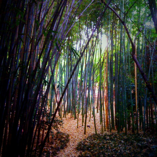 huntington library, japanese garden, bamboo forest, magical place