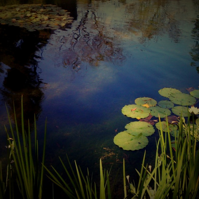breathing room, meditative space, dream, dream s pace, reflective pond, lily pads